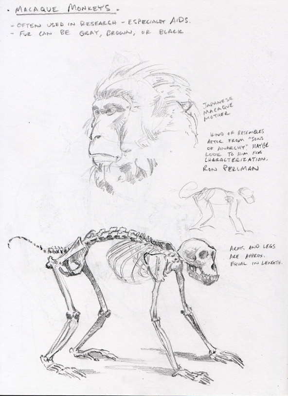macaque-research-sketch_1