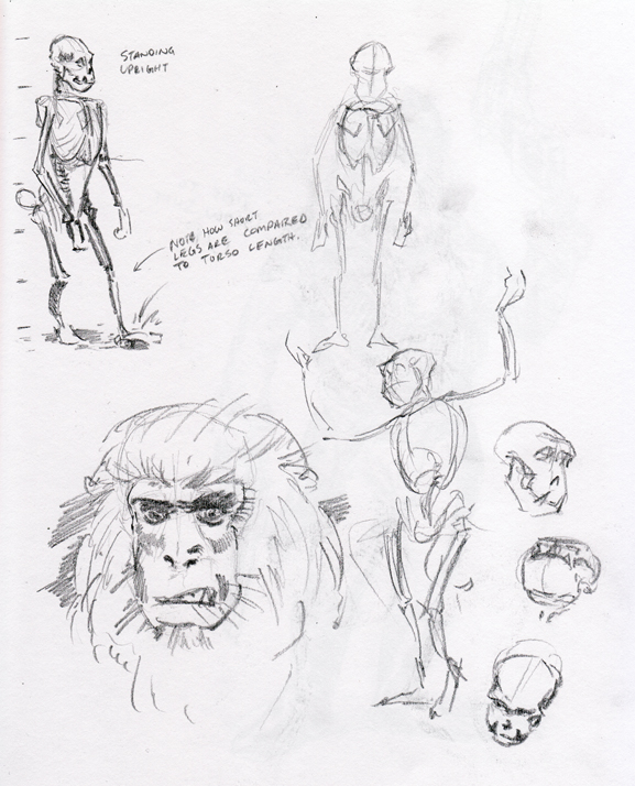macaque-research-sketch_2